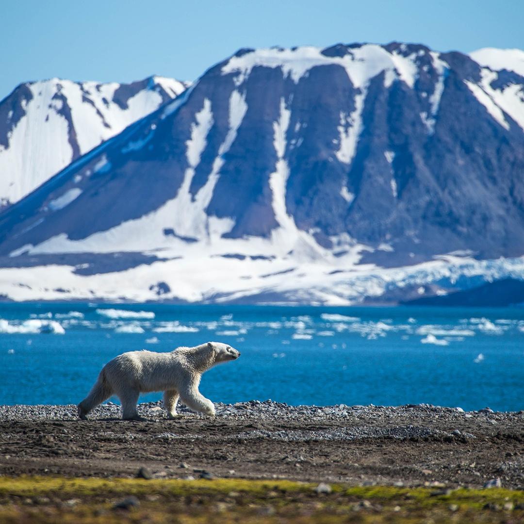 polar bear mountains