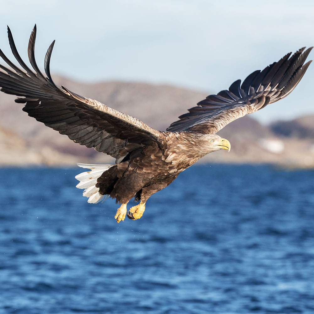 white tailed sea eagle seen on holiday