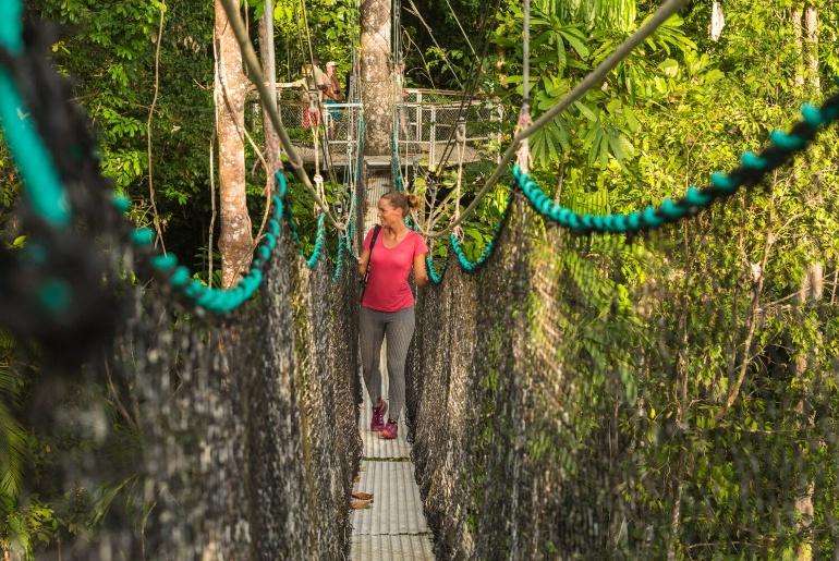Guyana Treetops