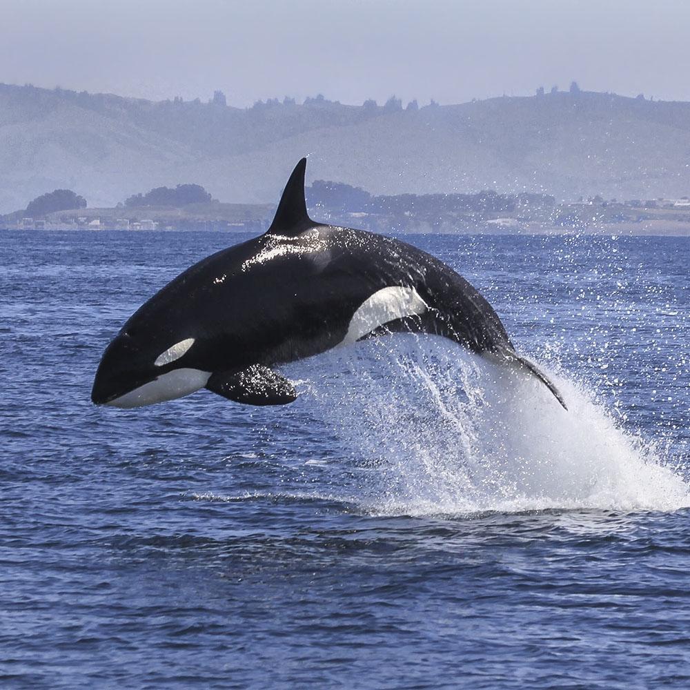 orca sailing holiday